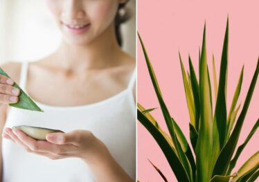 Ways in Which Aloe Vera is Good for the Skin